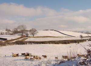 Winter in New Hutton