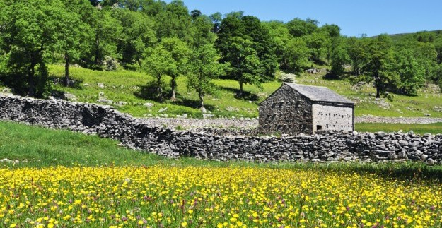 field barn in Dales meadow